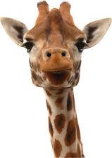 Sticker animal Tête de girafe 100x150cm