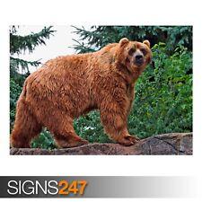 Kodiak Orso (3645) Animale POSTER-Foto Poster Arte Stampa A0 A1 A2 A3 A4