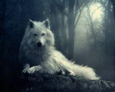 WHITE WOLF TELA più dimensioni Wall Art Poster Stampa Lupo Cane Animale