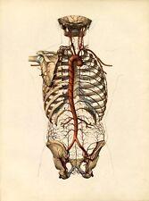 ANTIQUE 19TH C. MEDICAL PRINT THE AORTA  & CAROTID ARTERIES  A3 POSTER ART PRINT
