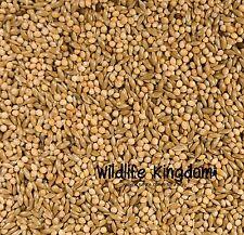 Classic Menu Premium Budgie Seed Food Budgerigar Mix Feed Millet Mixture ✔