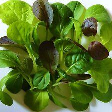MESCLUN - PAK CHOI MIX [salad leaves] - 4000 Seeds [colourful & crunchy mixture]