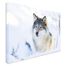 SNOW WOLF Caccia Canvas Wall Art STAMPA alta qualità grande valore