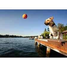 CHUCKIT Dogs Pet Fetch Balls & Toys Small Medium Large Launchers Interactive