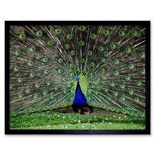 ILLUSTRATION DECORATIVE BIRD BLUE FEATHER CREST POSTER ART PRINT VE060A