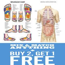 A2 a3 a4 Reflexology umano muscolare scheletrico studente di medicina Poster Stampa Grafico