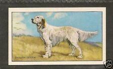 Rare 1936 UK Dog Art Full Body Gallaher Series A Cigarette Card ENGLISH SETTER