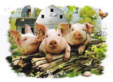 T SHIRT MANCHES LONGUES  COCHON  PIG   Dispo : S  M  L  XL  XXL  XXXL + ENFANT
