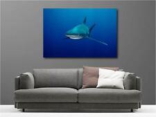 Tableaux toiles déco en kit Requin réf 2721708