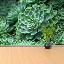 Photo sur papier peint Préencollé Amovible Réutilisable Cactus Vert