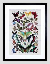 Página de pintura Adolphe Millot Mariposas Mariposa impresión arte enmarcado B12X12867