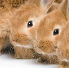 Birthday Card - Rabbits Bunnies Bunny Pets Blank Quality Card & Freepost!