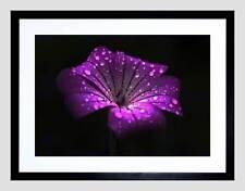 WATERDROPS ON SINGLE PURPLE FLOWER BLACK FRAME FRAMED ART PRINT PICTURE B12X9533