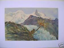 Alpi NEAR ZERMAT eidelweiss W / col inglese SCH C 1860
