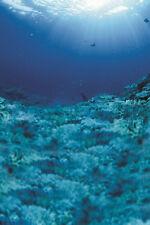 3D Blue sea, sunshine 54032 Wall Paper Wall Print Decal Wall Deco AJ WALLPAPER