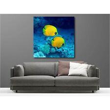 Tableaux toile carré poissons tropicaux 55795534