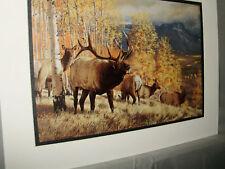 Rocky Mountain Elk at Aspen Remington Wildlife Exhibit