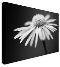 Negro Y Blanco Margarita Floral Flor LONA pared arte grande + cualquier tamaño de la imagen