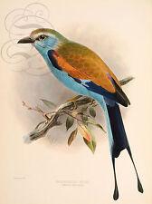 PLAQUE ALU DECO LITHO OISEAU BIRD DRESSER RAEQUATTAILED ROLLER