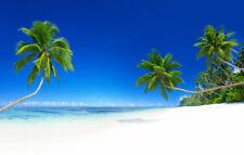 Fototapete Selbstklebend - Palme Strand Urlaub - Made in Germany - Bildtapete