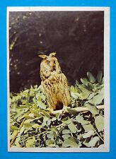 Figurina Panini-ANIMALI DI TUTTO IL MONDO 1965-n.195-GUFO REALE-rec