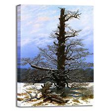 Caspar Oaktree con neve design quadro stampa tela dipinto telaio arredo casa