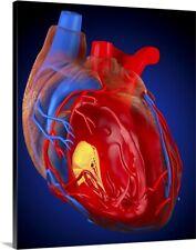 """Structure of a human heart, artwork"" Canvas Art Print"