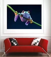 Affiche poster décoration murale Grenouille réf 3377064 (6 dimensions)