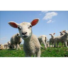 Stickers muraux déco : troupeau agneau 1487