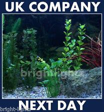 Tira De Luz Led Set Ip68 Blanco Sumergible Acuario Luces Fish Tank iluminación del Reino Unido