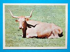 Figurina Panini-ANIMALI DI TUTTO IL MONDO 1965-n.121-BUE-rec