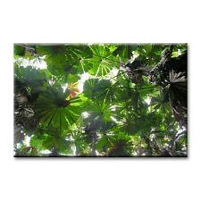 Cc Arte-Lona Impresión de Arte-Palm Rainforest - 24 pulgadas x 36 pulgadas