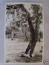 DOPS RPPC Sausage Tree Charlie Blacks On Ingraham HWY Cocoanut Grove FL Postcard