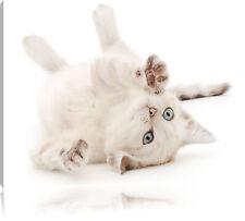 kleine Katze Leinwandbild Wanddeko Kunstdruck