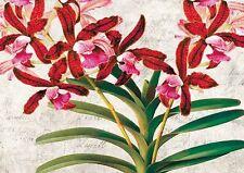 Remy dellal: botanique moderna i marcos de cuña-imagen lienzo flores landhaus multicolor