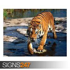 Merodeador Bengal Tiger (3785) Cartel De Animales-foto arte cartel impresión * Todos los Tamaños