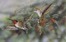 Gamini Ratnavira Ruby Throated Hummingbird  Print 12 x 7.75