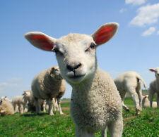 3D Moutons Jolie 47 Photo Papier Peint en Autocollant Murale Plafond Chambre Art