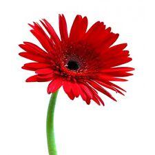Sticker Fleur pétales rouge 70x45