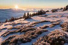 VLIES Fototapete-WINTERLANDSCHAFT-(3967V)-Schnee Natur Landschaft Bäume Nebel