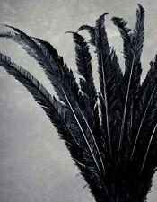 "3 BLACK Ostrich NANDU Trimmed FEATHERS 18-23"" PLUMES; Costume/Halloween/Bridal"