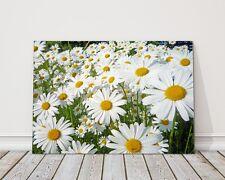 GIANT DASIES Canvas Print IMMAGINE Incorniciato Wall Art fiori