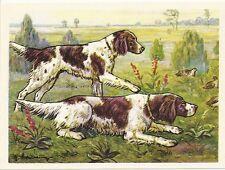 1952 Dog Art Print Austria Tobacco Company Bildwerk Card Small L/W Munsterlander