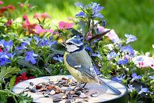 VIBRANT FLORAL BLUE TIT BIRD TABLE CANVAS PICTURE PRINT #2394