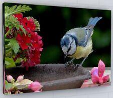 VIBRANT FLORAL BLUE TIT BIRD CANVAS PICTURE PRINT #2395