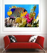 poster poster decorazione da muro Pesce coralli ref 71524963 (6 dimensioni)