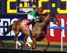 "Animal Kingdom Dubai World Cup Photo 8"" x 10 - 24"" x 30"""
