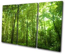 Landscapes Woodland Forest TREBLE LONA pared arte Foto impresion