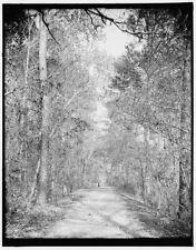 Photo of Lover's sic Lane Aiken S C 1903 Detriot Publishing co. 32a