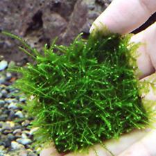 1/5/10PCS Stainless Steel Wire Mesh Pad Aquarium Fish Tank Plants/Moss Adorn